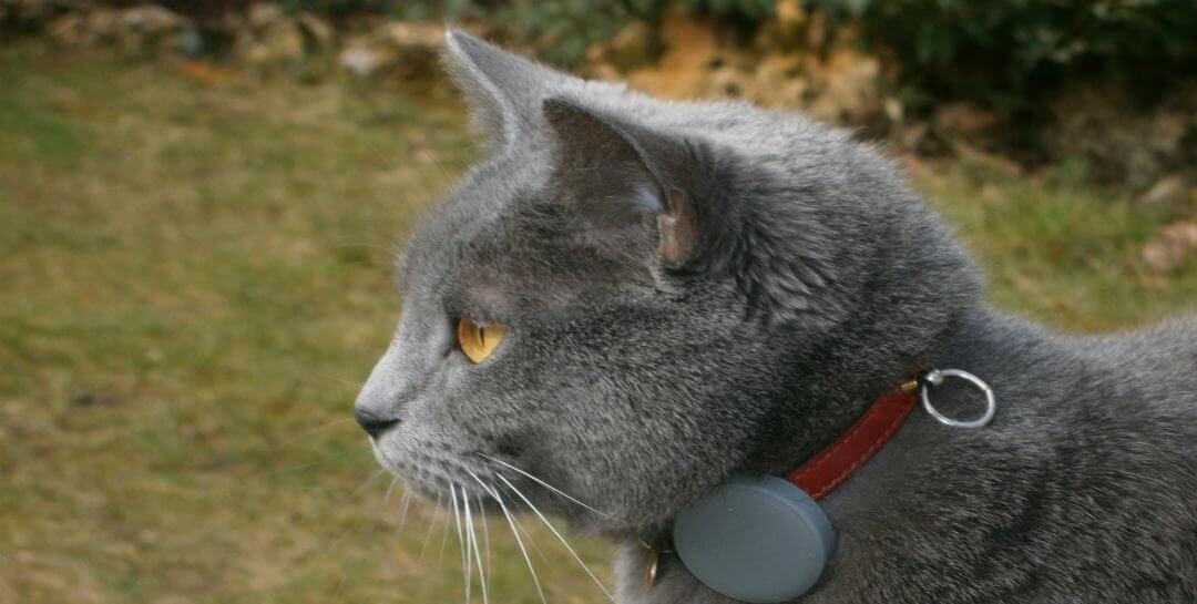 Katt GPS bäst i test
