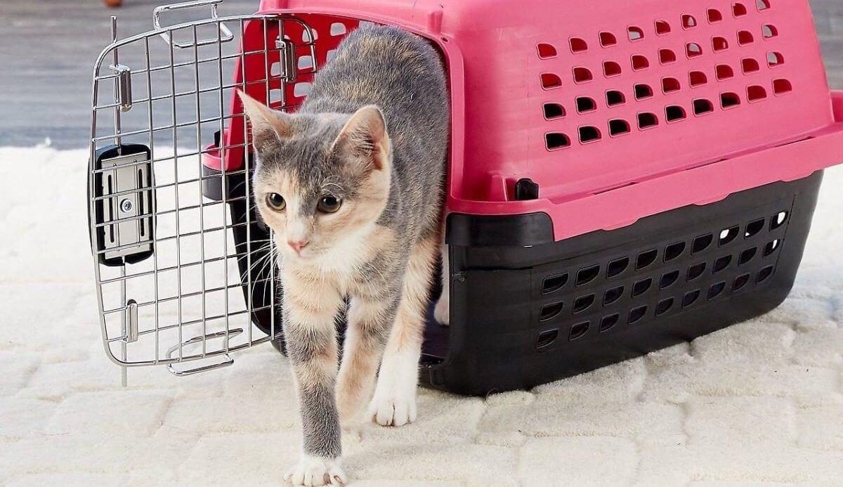 Transportbur katt bäst i test