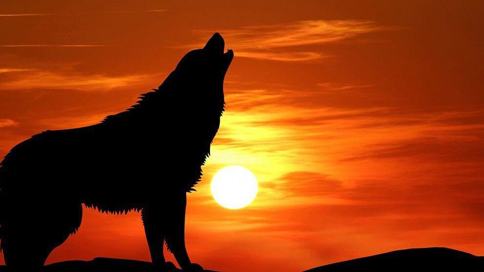 Hund ylar på natten