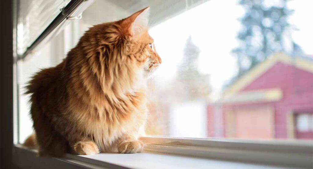 Katt ensam hemma