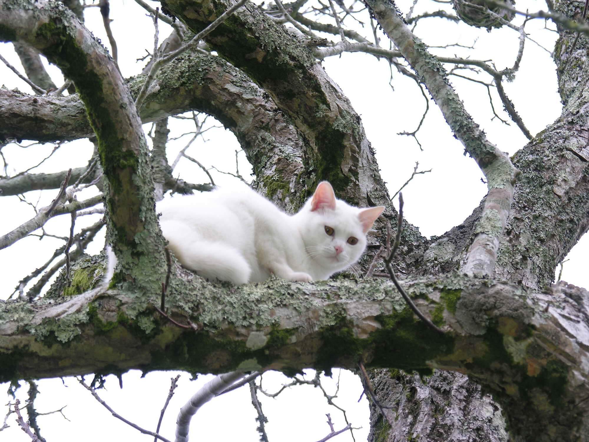 Katt i träd