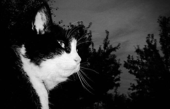 Katt ute på natten