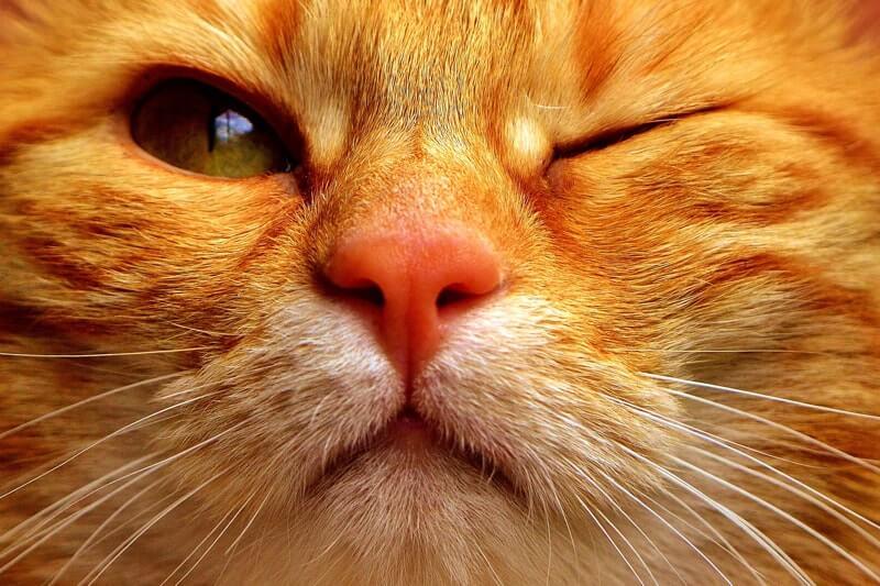 Ögoninflammation katt