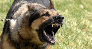 Hur får man en hund att sluta skälla