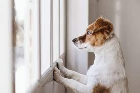 Hur länge får en hund vara ensam